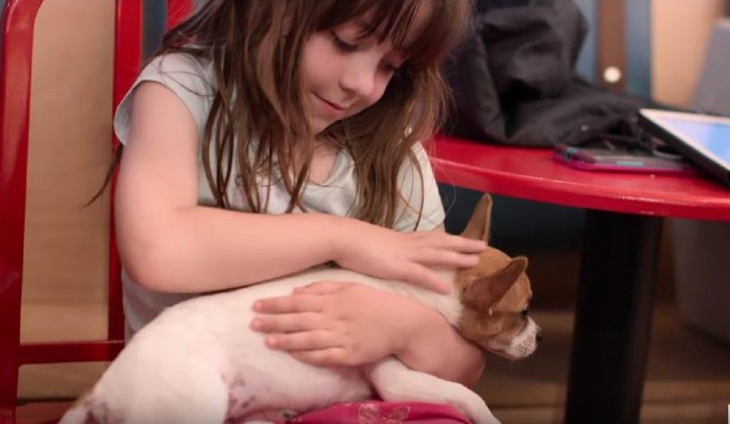 Вышел трейлер трогательного сериала «Собаки»