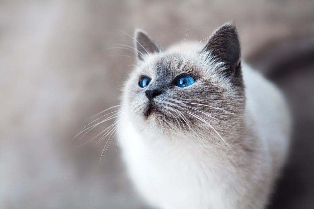Кот стал звездой модного показа в Турции — видео
