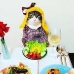 Кот Маро из Японии прославился благодаря костюмированным ужинам с хозяйкой