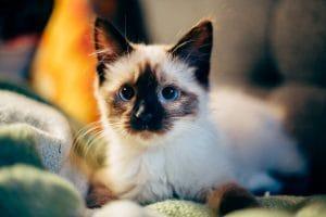«Золотой» котенок: студентка отдала 340 тыс рублей ради бездомного животного