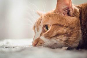 Пара настойчивых котиков два года пытается попасть в музей Японии