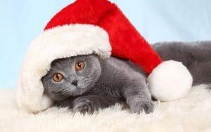 Как вернуть себе расположение кота? «Яндекс» собрал самые забавные запросы за 2018 год