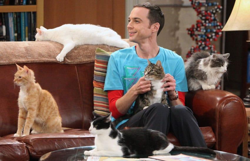 Как кошка с собакой: что говорит о тебе выбор домашнего питомца