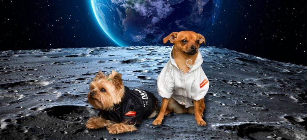 Космическая мода: коллекция одежды для собак