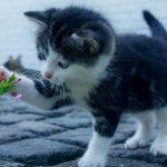 Опубликовано видео самой маленькой кошки в мире