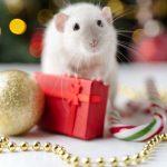 Какие блюда должны быть на столе в год Белой Металлической Крысы